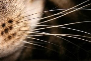 First 3D simulation of rat's complete whisker system acts as a tactile 'camera'