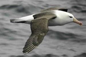 Where Antarctic predatory seabirds overwinter