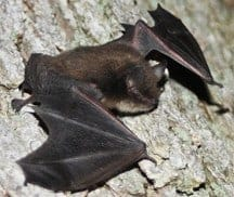 Rare Form of Active Jumping Genes Found In Mammals