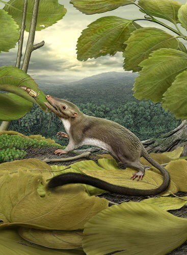 New proto-mammal fossil sheds light on evolution of earliest mammals