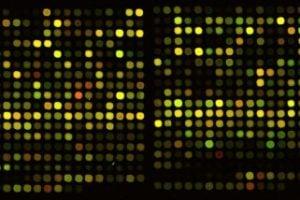 Gathering the clues to rare gene variants contributing to schizophrenia
