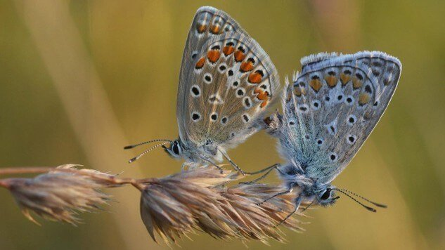 Populations of grassland butterflies decline almost 50% over two decades