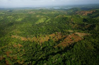 Saving trees in tropics could cut emissions by one-fifth, study shows