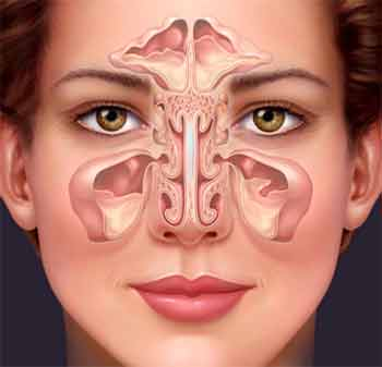 Chronic stuffy nose? Could be your microbiome