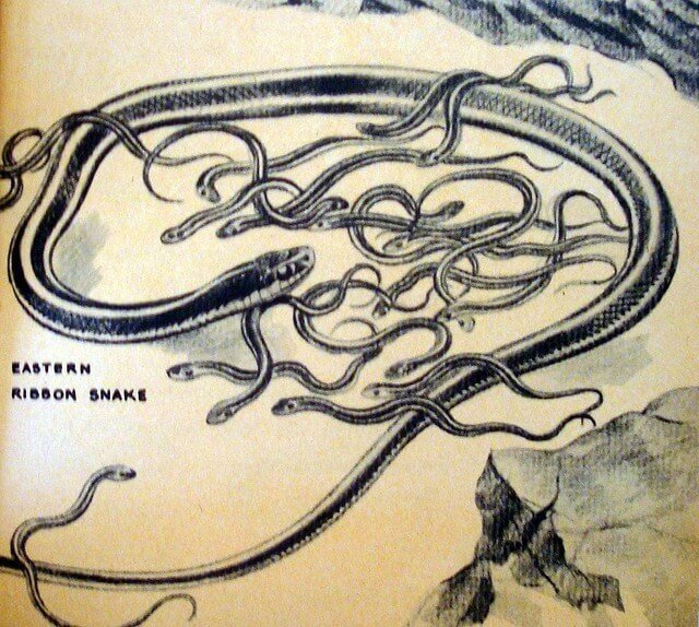 Pushing them out: Snake ancestor likely gave birth to live young