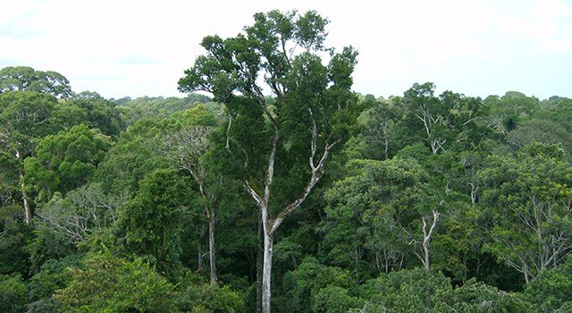 Amazon's recovery from forest losses limited by climate change