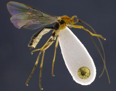New insect species named after Shakira and Jimmy Fallon