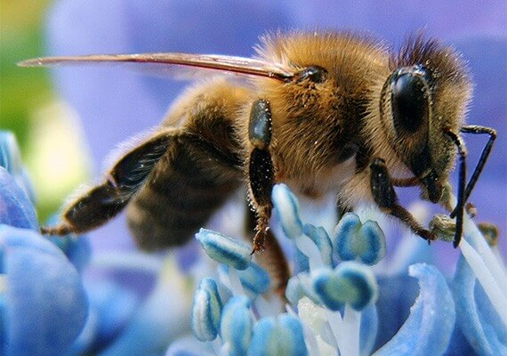Are failing bees our warning sign?