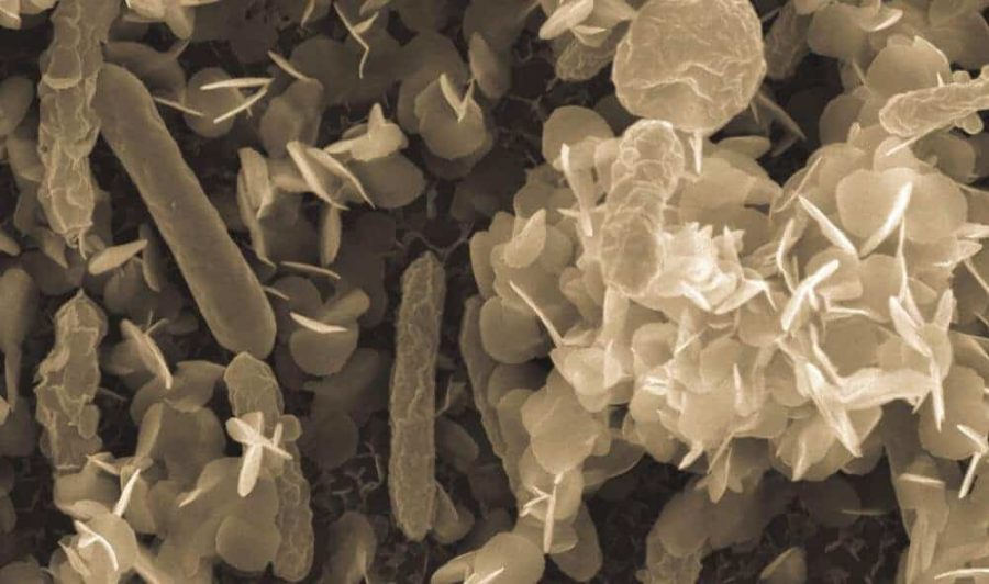 Boosting armor for nuclear-waste eating microbes