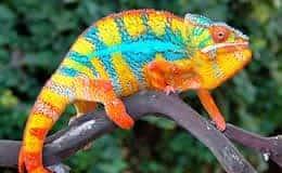 Color Changing Behavior