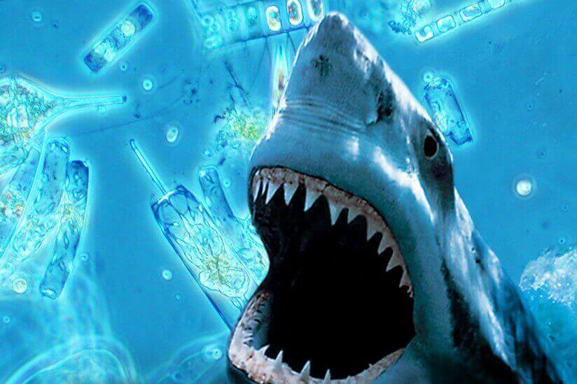 Shark Week wouldn't happen without the small frys