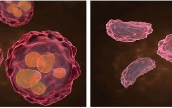 NSF research finds way to withhold cancer cells' favorite food