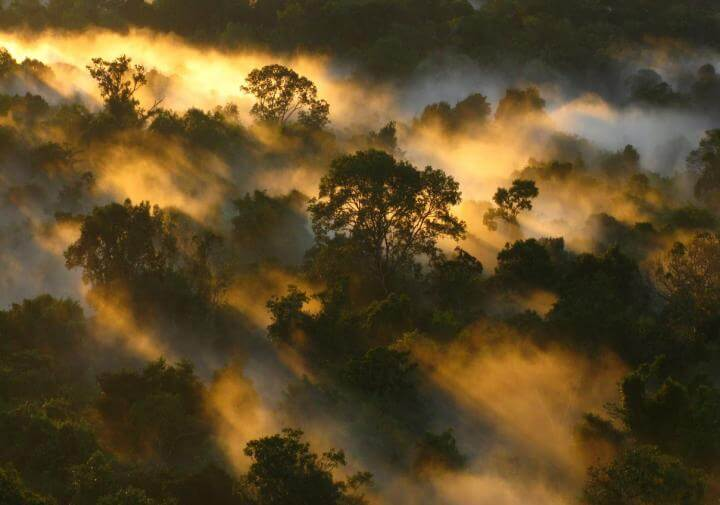 Drought stalls tree growth and shuts down Amazon carbon sink