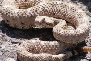 Reptile 'super glue' stops bleeding in seconds using visible light