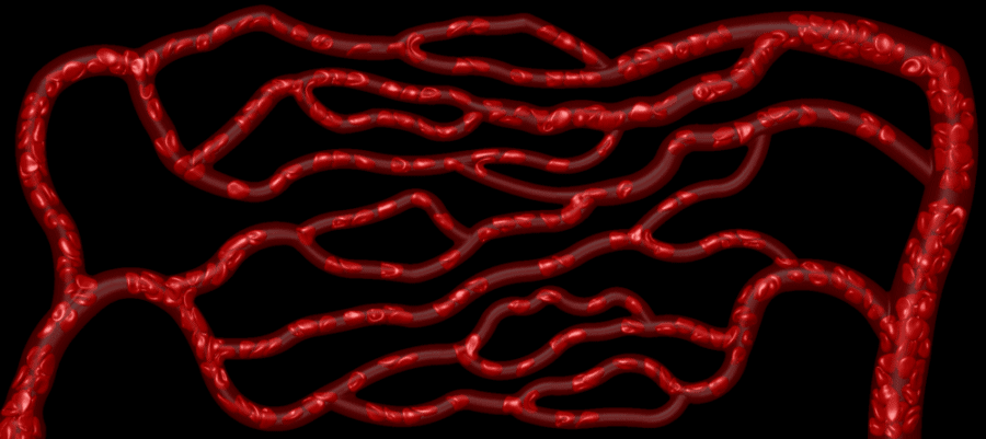 The Complex Journey of Red Bloods Cells Through Microvascular Networks