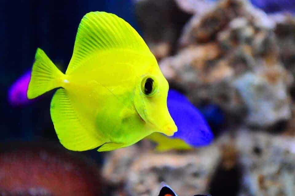 baby fish led astray by high co2 in oceans scienceblog com