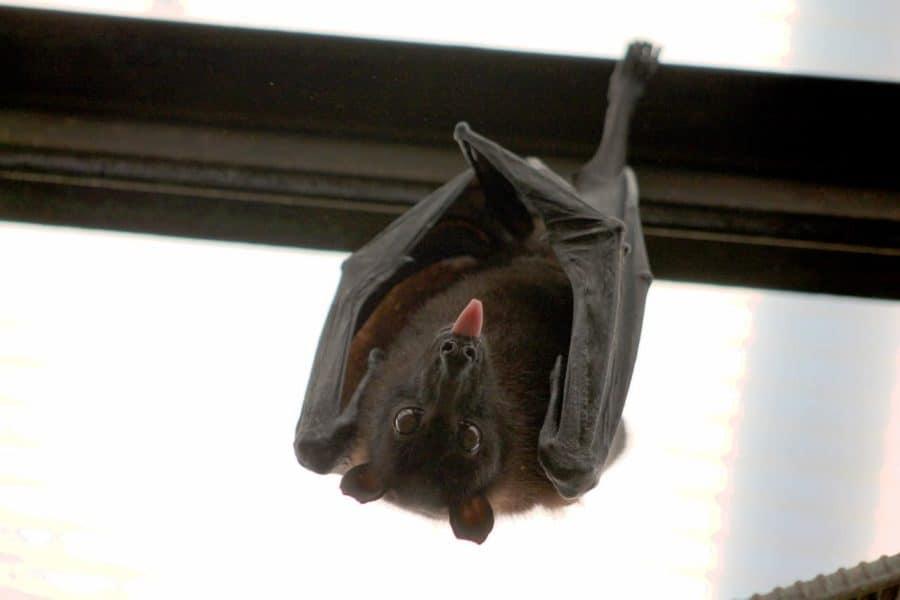 Are bats getting a bad rap?