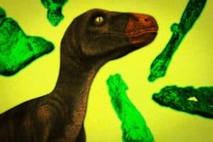 Study sheds light on the evolution of the earliest dinosaurs