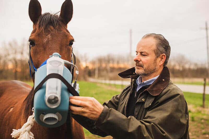 Fall allergies can trigger horses' asthma, impact performance