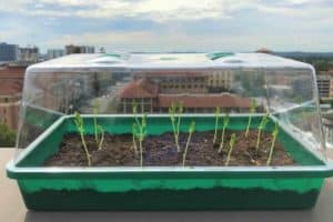 Self-Watering Soil Could Transform Farming
