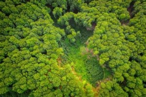 Trees can help slow climate change, but at a cost
