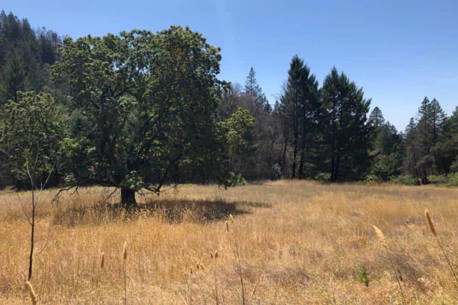 How soil fungi respond to wildfire