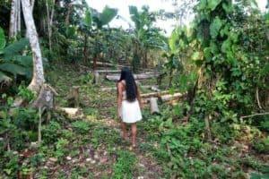 No social distancing in borderless Amazonia