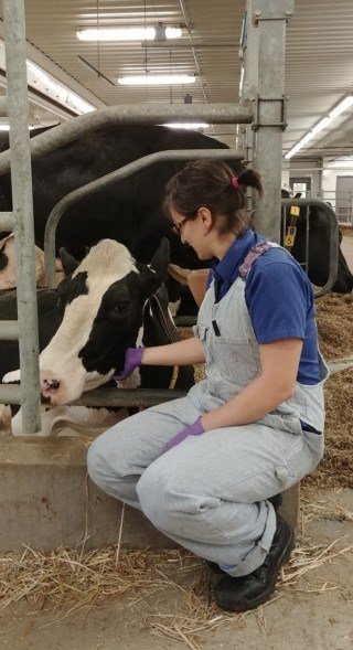 The digestive system of cows influences human's vitamin B12 intake
