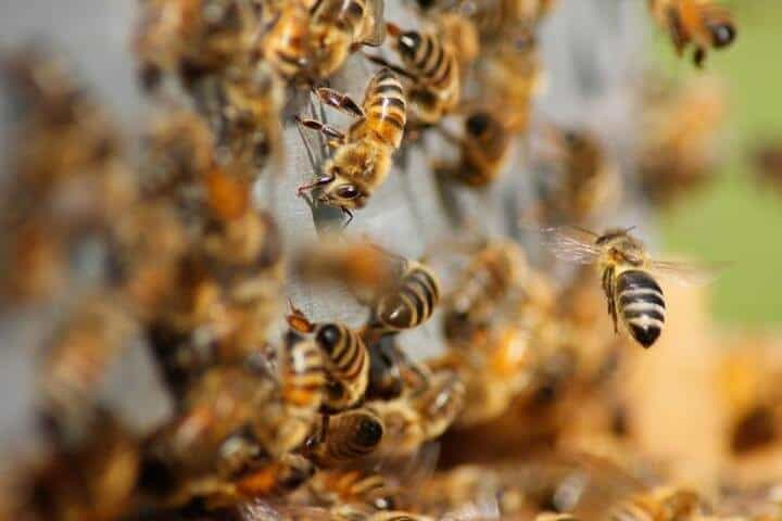 US beekeepers continue to report high colony loss rates, no clear improvement
