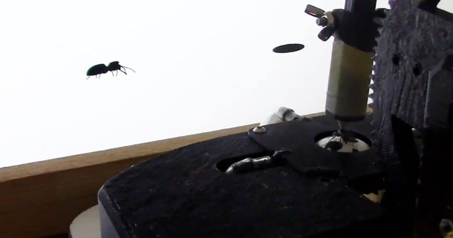 Jumping spiders can identify biological motion