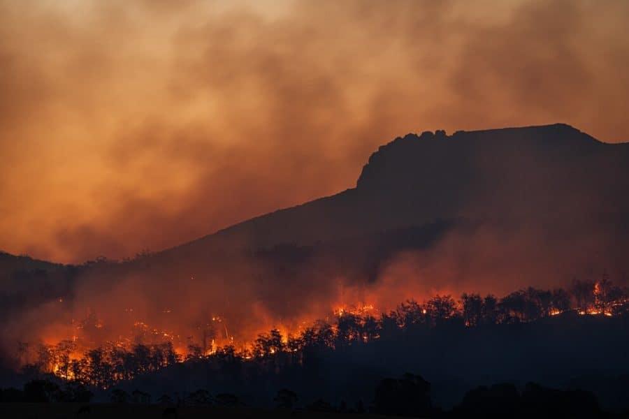 Megafires burn critical habitat of 'Vulnerable' virus-harboring bats