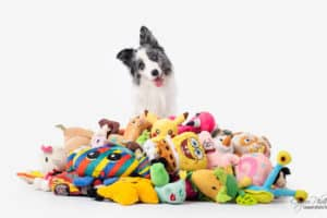 'Genius dogs' show exceptional learning capacities