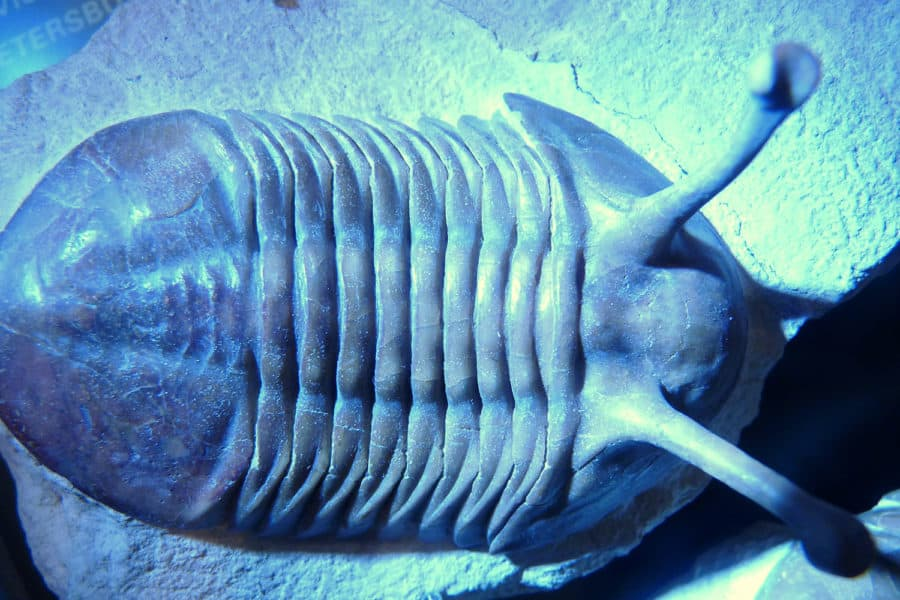 Extinction changes rules of body size evolution