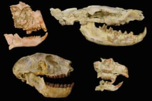 The Climate-Driven Mass Extinction No One Had Seen