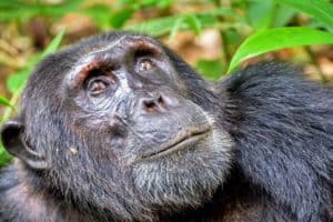 Tree-dwelling mammals survived after asteroid strike destroyed forests